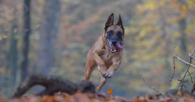 modi per allenarti con cane