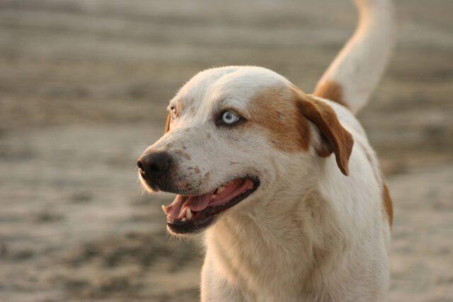 cane sorriso tenero