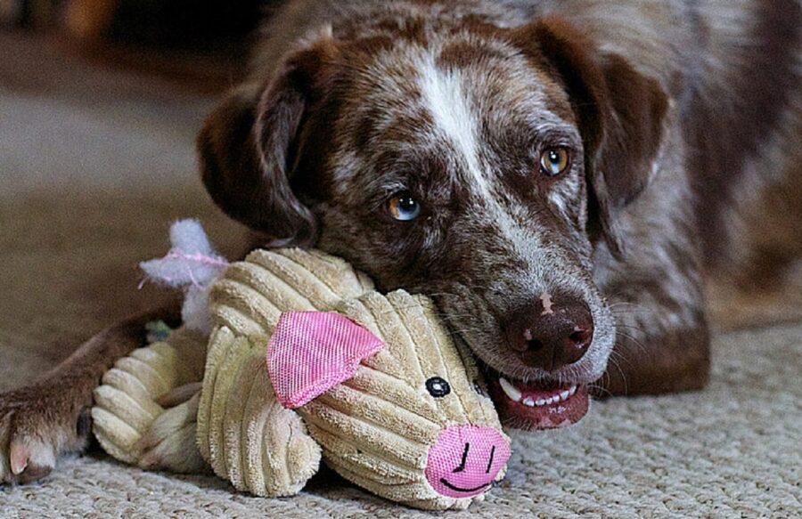 cane giocattolo morde