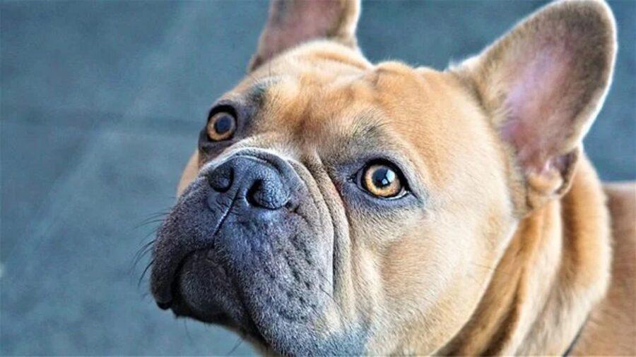 cane sguardo segnali