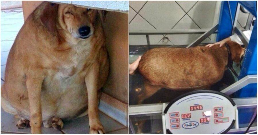 cane Bolinha due foto triste