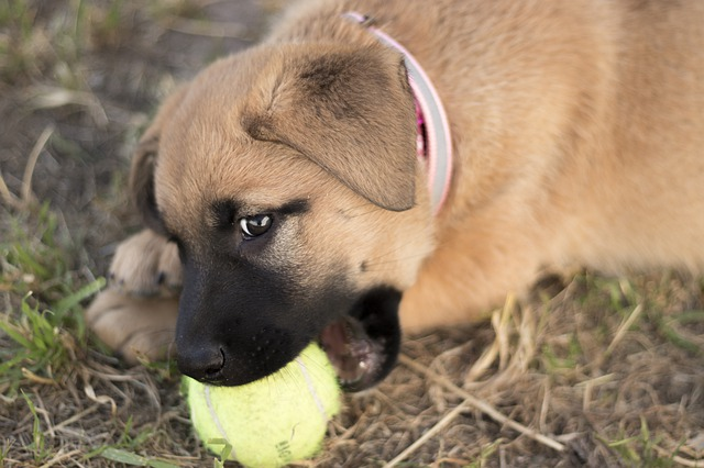 cane adottato che rosicchia