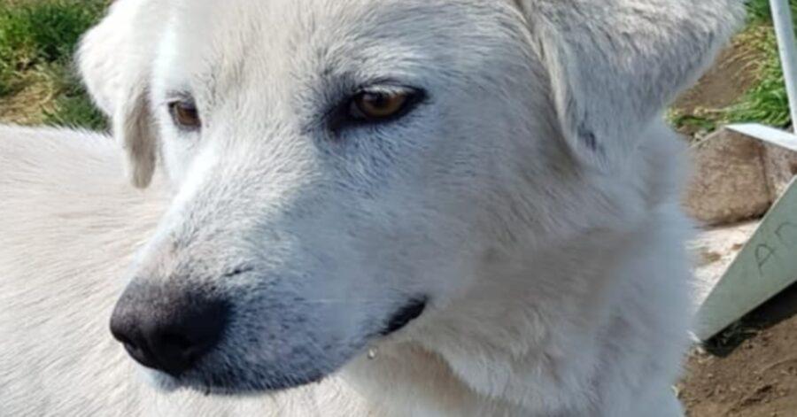 Cucciolona salvata osserva
