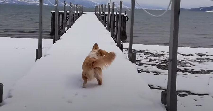 Dopo l'abbandono, questo cucciolo di cane vede per la prima volta le neve e non riesce a trattenere l'emozione