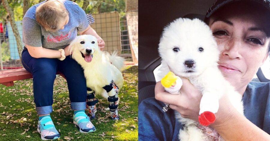 cagnolina senza zampe con protesi, da cucciola e da adulta