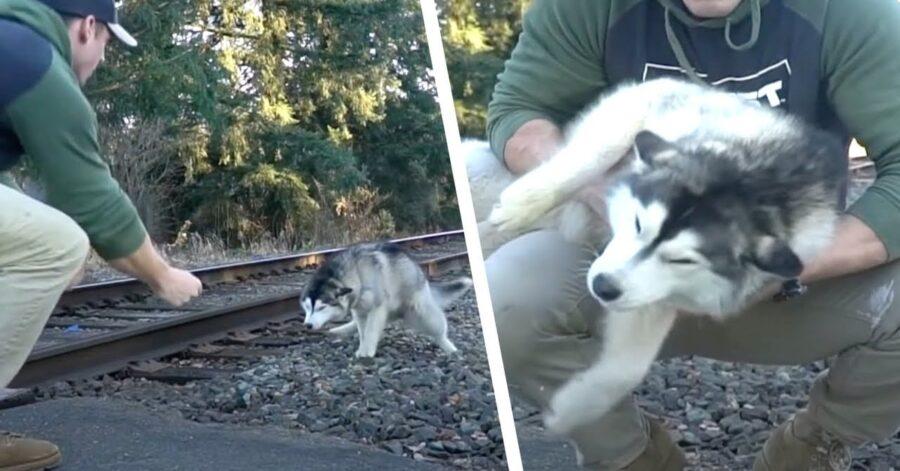 Husky salvato da un vigile del fuoco