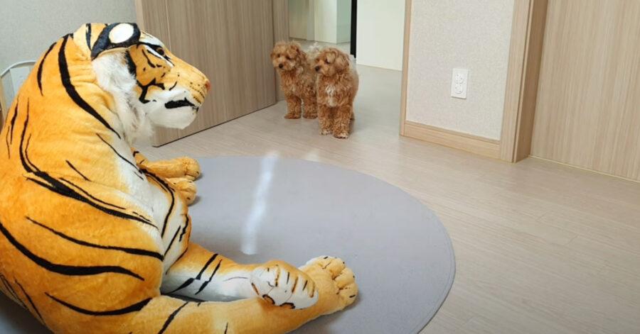 Cani di fronte ad un peluche a forma di tigre