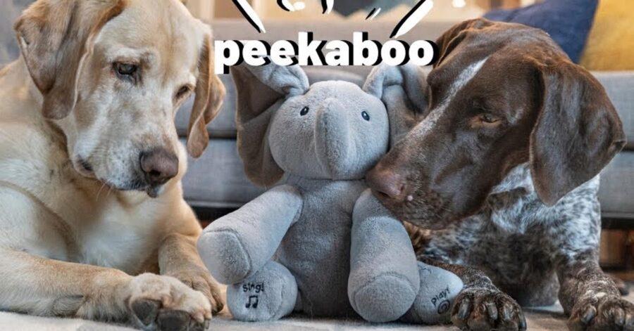 Cani che giocano con un peluche a forma di elefante