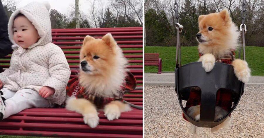 Cane al parco gioco con una bambina