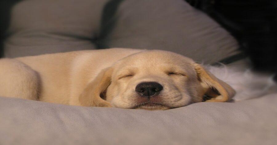 Casper cucciolo di cane video
