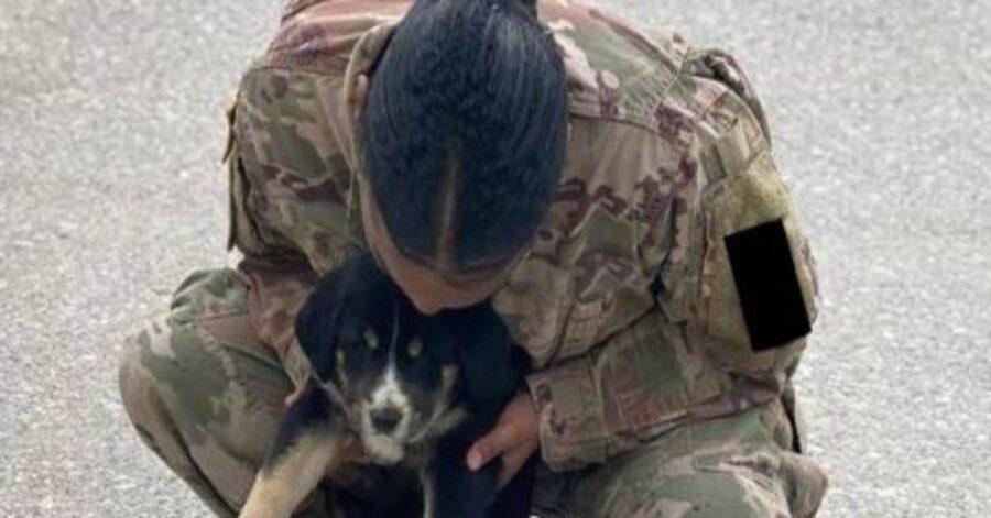 Puppup cucciolo di cane militare video
