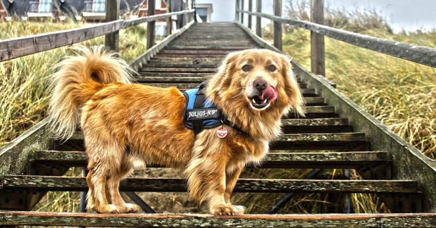 Cane sulle scale