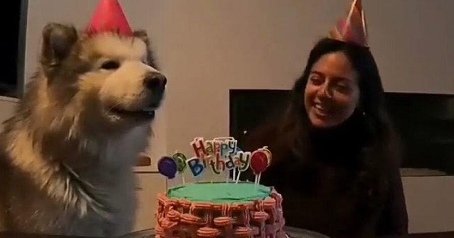 Cane festeggia compleanno con la padrona