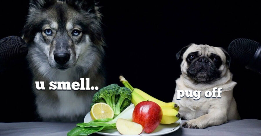 Cani ad un test di assaggi