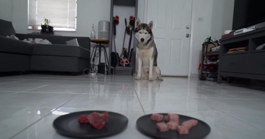 Cane che osserva due piatti di carne