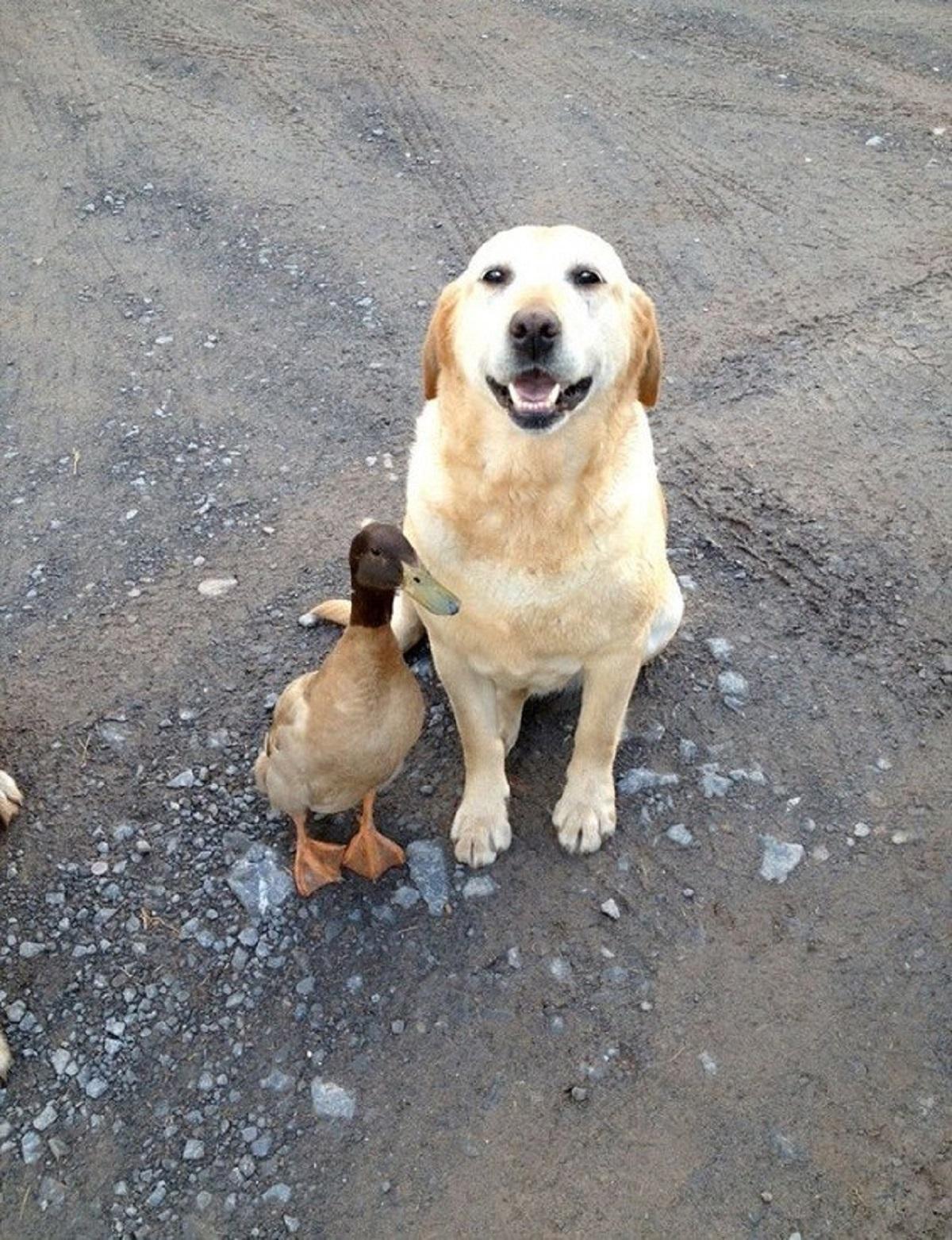 cane e amico