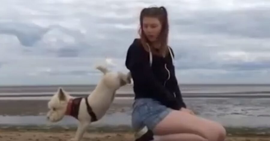 Louby, la West Highland Terrier che sa fare una perfetta verticale (VIDEO)