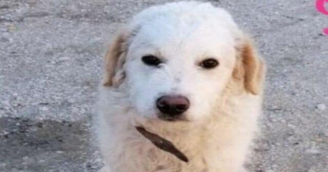Mister White, il cucciolo di 7 mesi che vuole solo trovare una famiglia