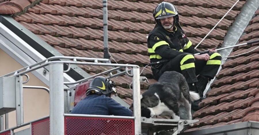 padrone riesce a prendere il suo cane con l'aiuto di un pompiere