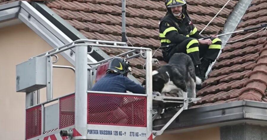 cane terrorizzato sul tetto viene salvato