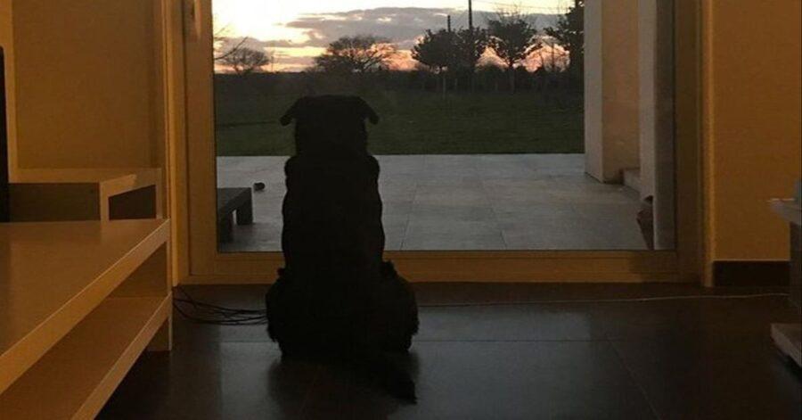 Nala aspetta il suo padrone morto sulla porta