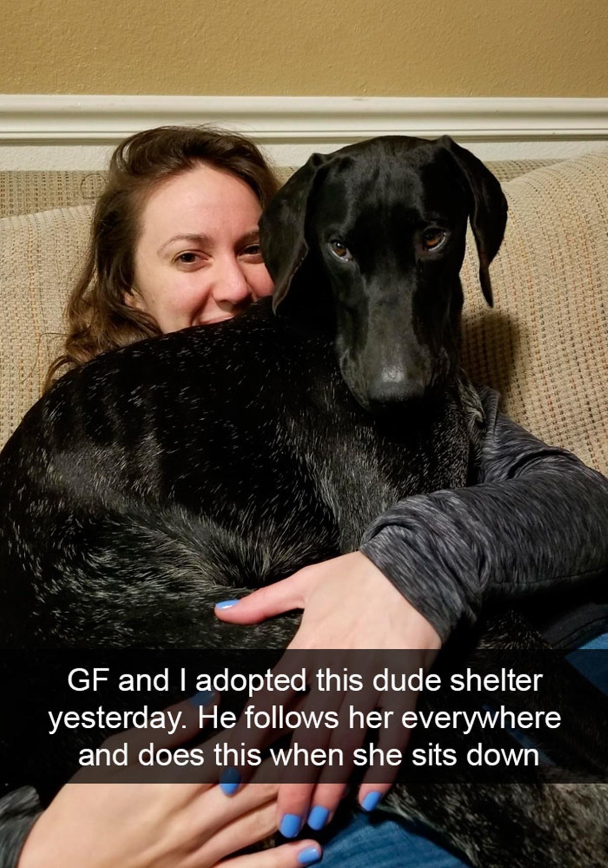 cane appena adottato
