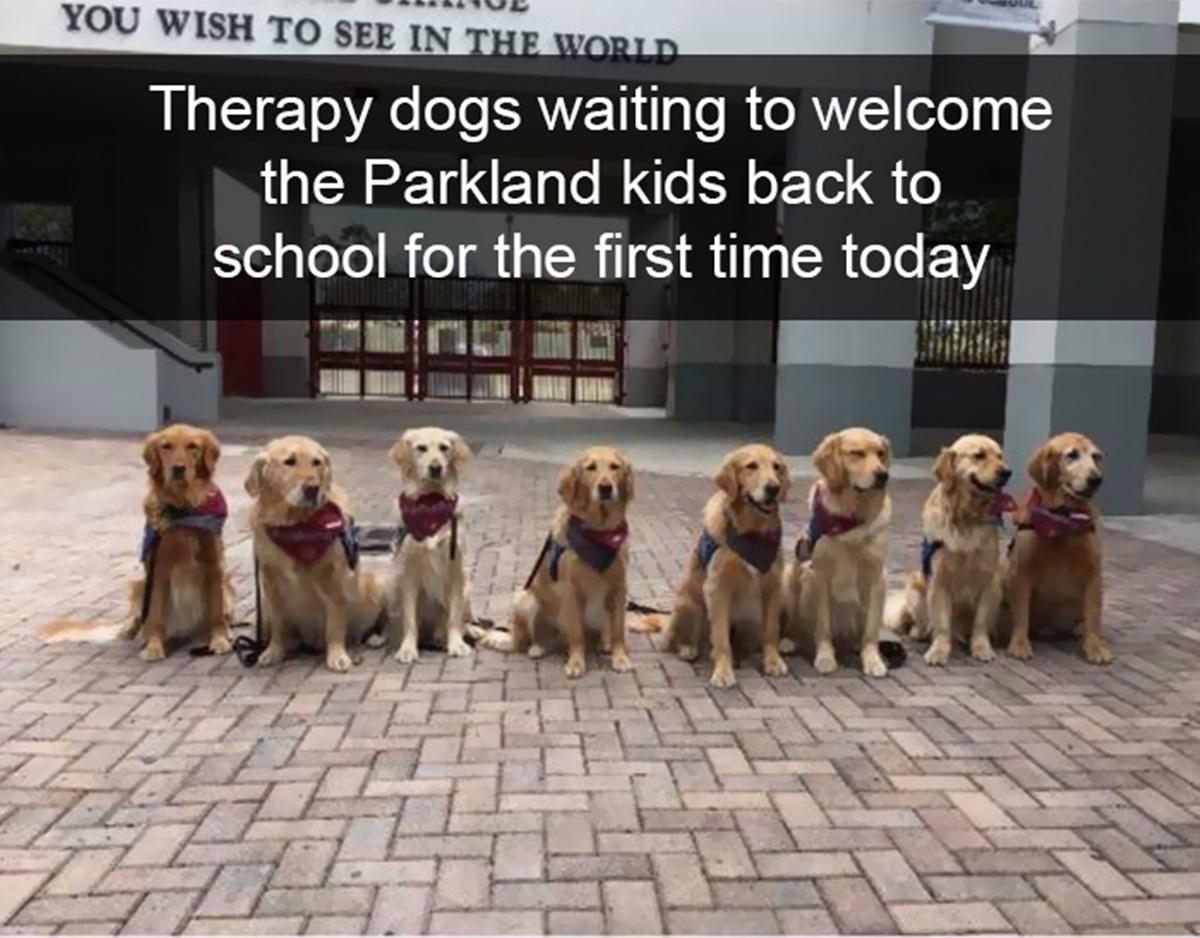 Non ci meritiamo i cani-cani aiuto
