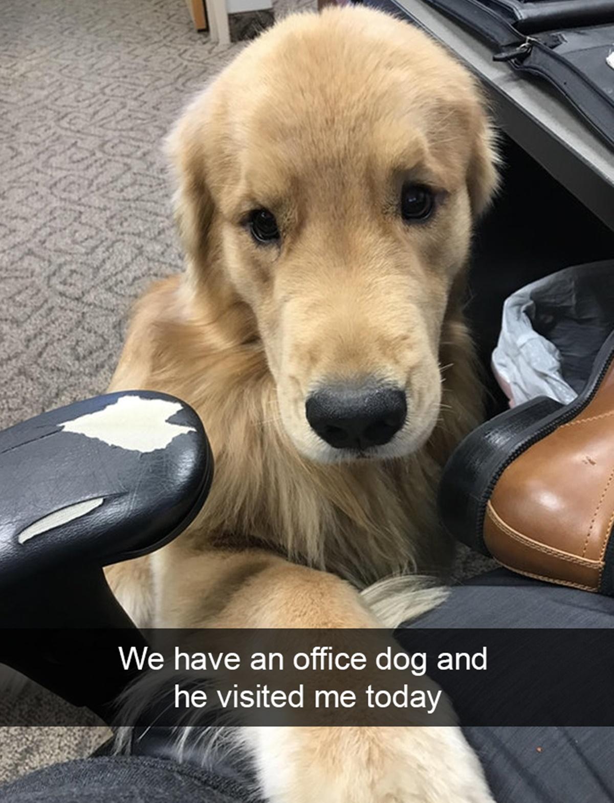 Non ci meritiamo i cani-cane ufficio