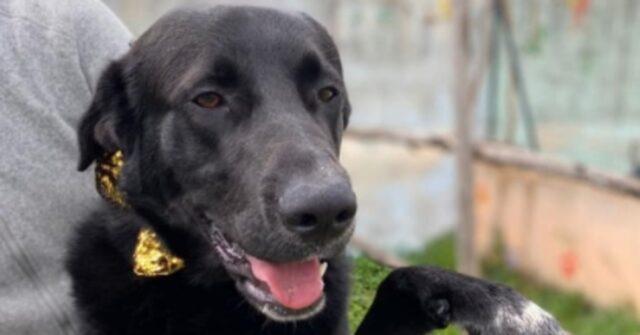 Pablo, il cagnolone rimandato già troppe volte in canile, cerca ancora una famiglia