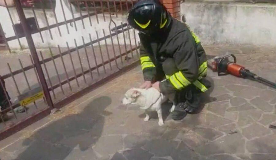 Pepe, il cucciolo che tenta la fuga d'amore e resta incastrato, il video del salvataggio