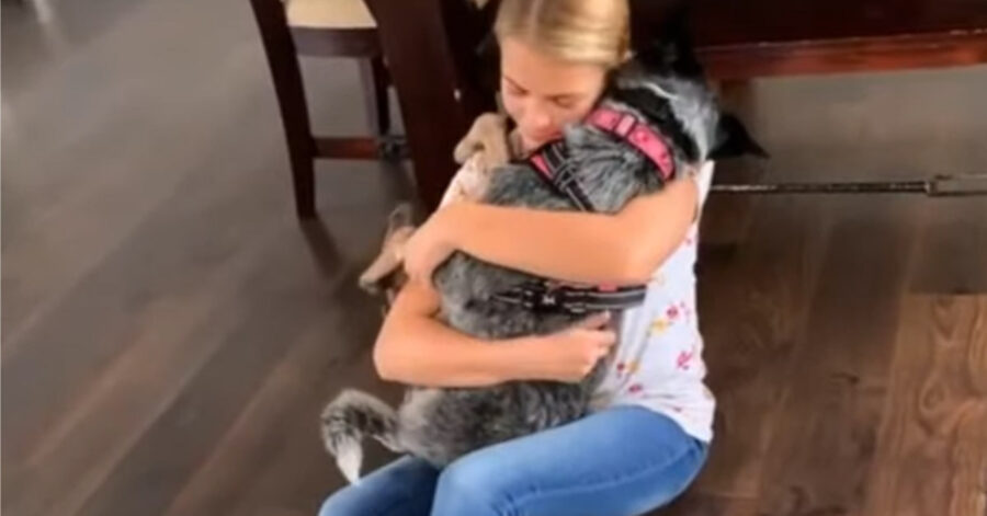 Questo Australian Cattle Dog non riesce a stare lontano dalla sua padrona (video)