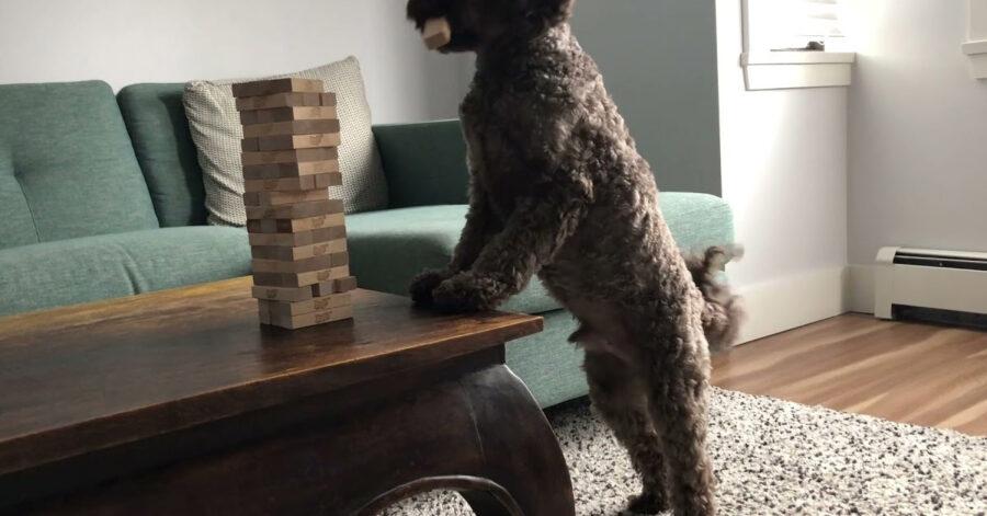 Cane gioca a Jenga