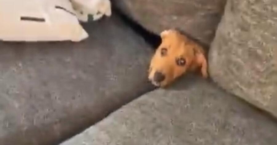 Cane nel divano