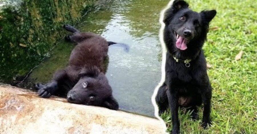 cane salvato dopo esser caduto in un canale di scolo