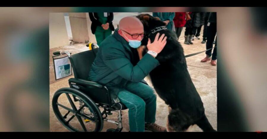 Sadie abbraccia il suo padrone in sedia a rotelle