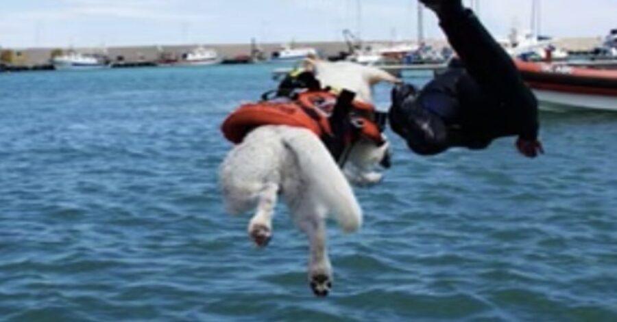 cane bagnino si tuffa in mare