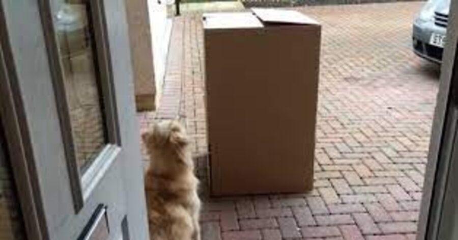 Sandy davanti allo scatolone