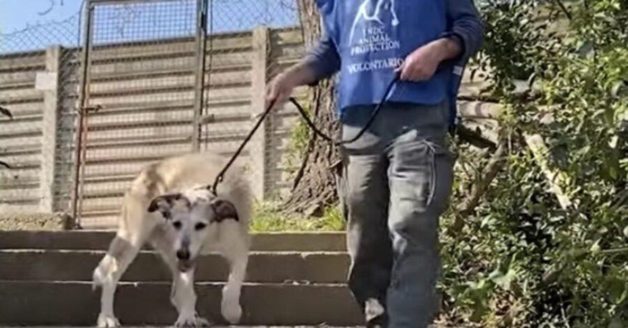 cagnolina scende le scale con un volontario