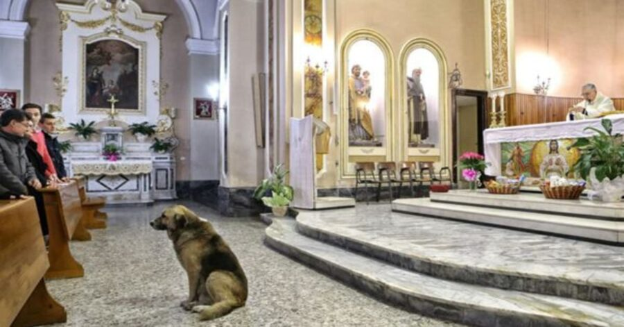 Cane Tommi in chiesa
