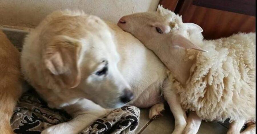 Torquato abbracciato a un cane