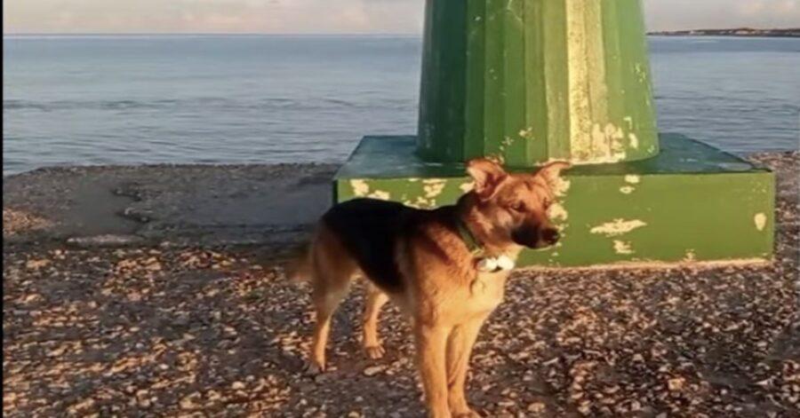 Cane sulla spiaggia