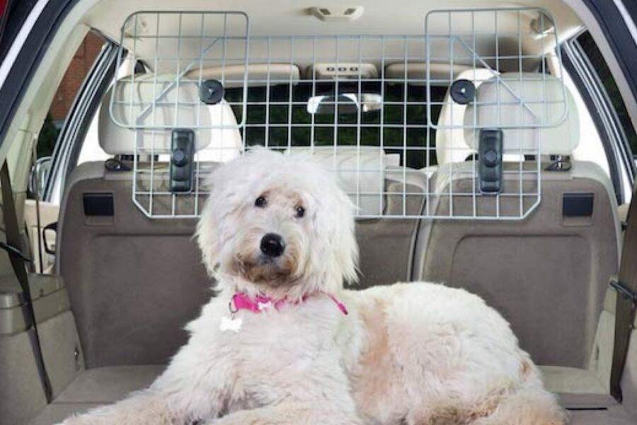 divisore per auto con cani