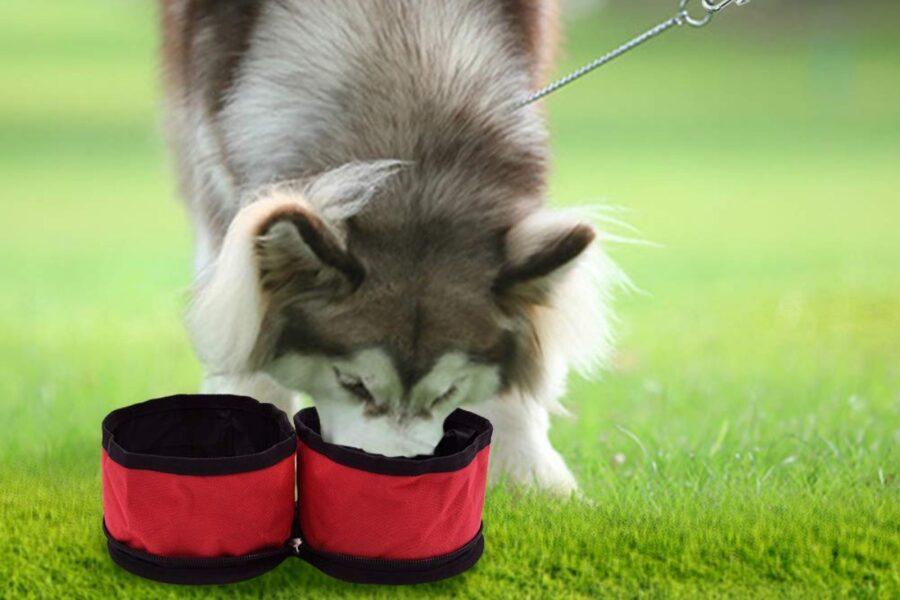 ciotole portatili per cani