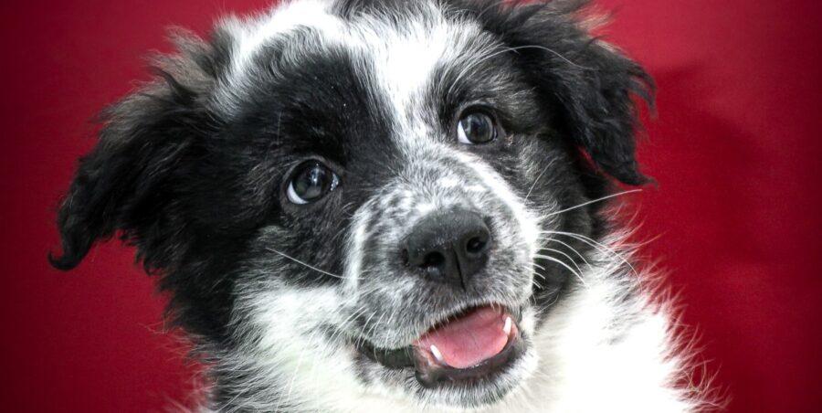 Adozione cane cucciolo