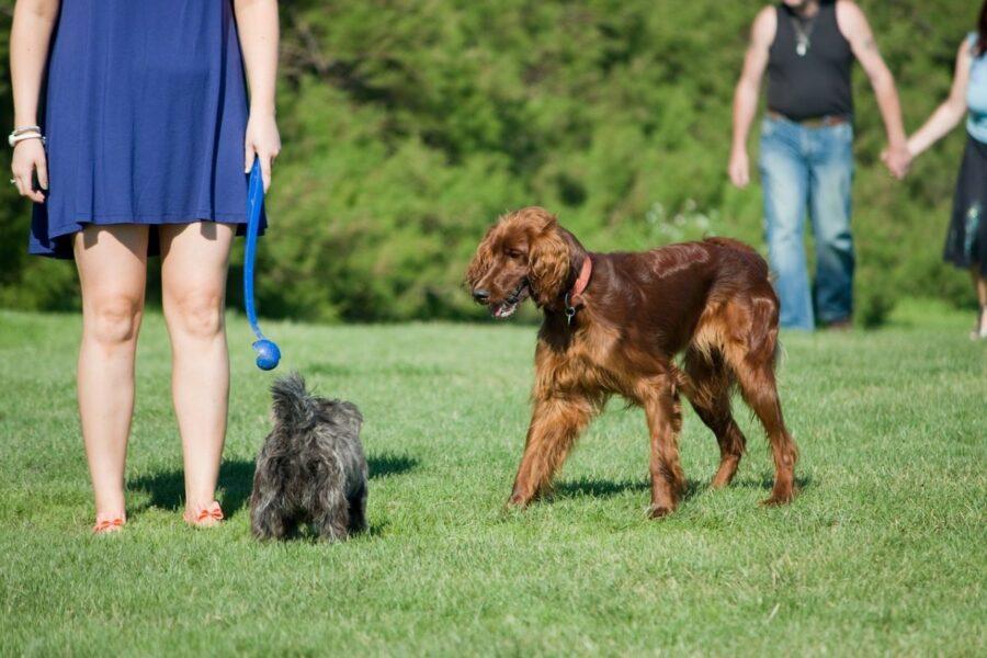 cani che passeggiano al parco