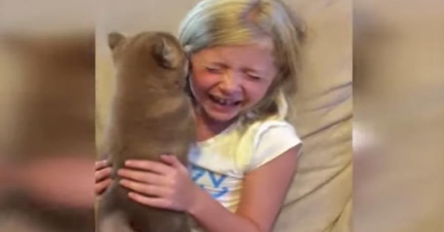 bimba abbraccia cucciolo Shiba Inu