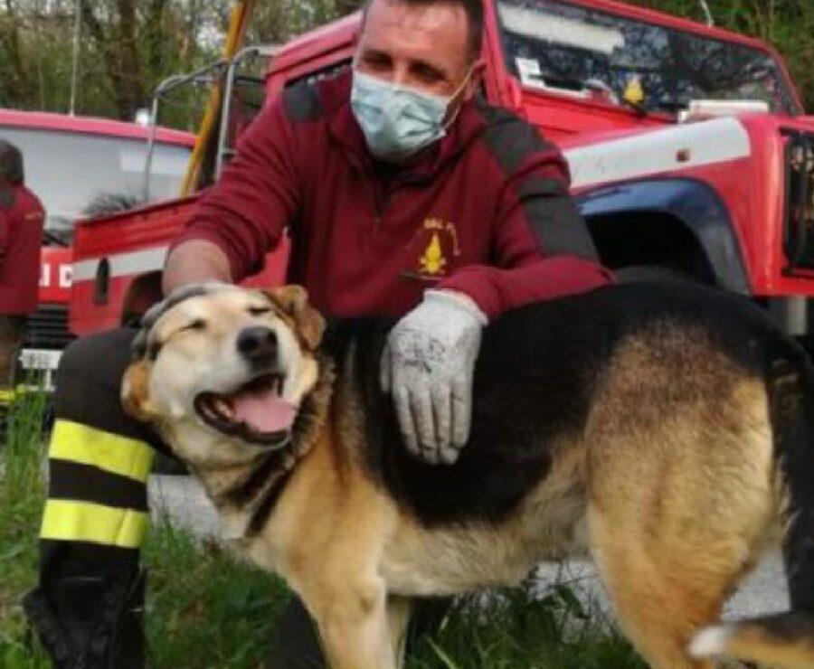 barge cane salvataggio pompieri