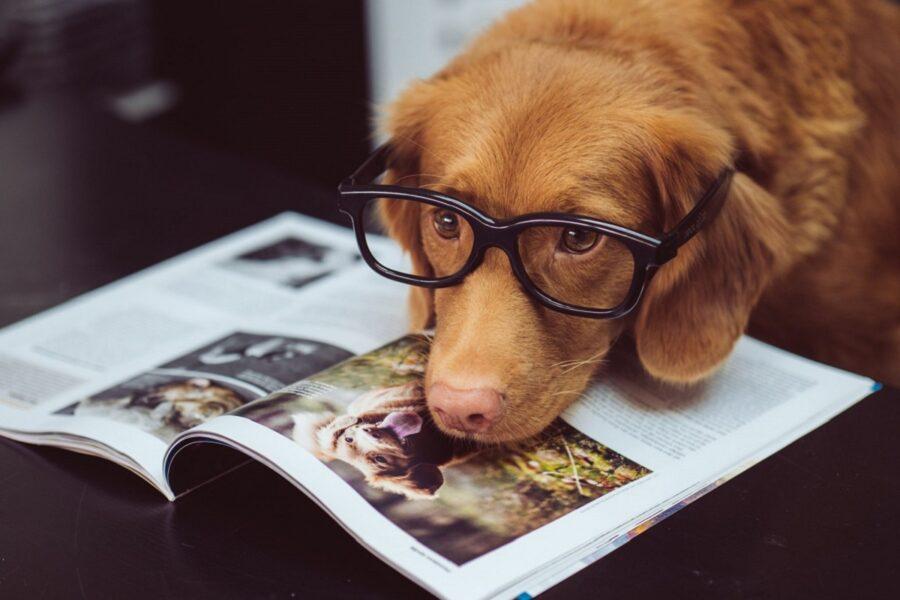 cane con occhiali da vista