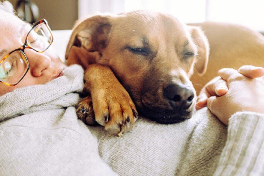 cane dorme su padrona