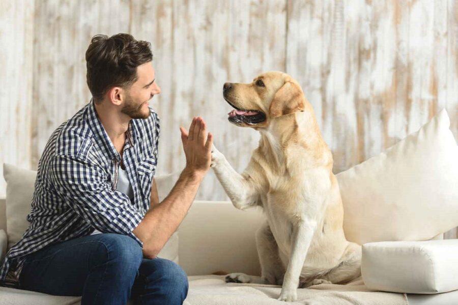 batti cinque con cane